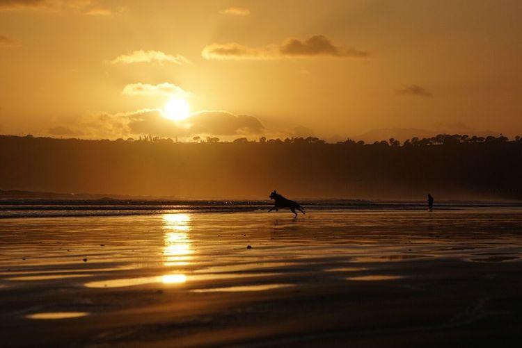 Playtime Dogdaysofsummer Dogs Dogslife Sunset Sunset Silhouettes Sunset_collection EyeEm Best Shots San Diego Coronado Beach Coronado Bridge Sony A6000 Eyembestshots