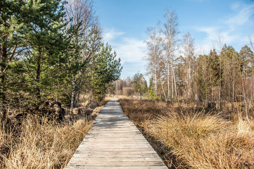 Beauty In Nature Boardwalk Branch Day Diminishing Perspective Footpath Growth Landscape Long Moorland Narrow Nature Non-urban Scene Outdoors Pathway Plant Scenics Sky Solitude Southern Germany Surface Level The Way Forward Tourism Tranquil Scene Tree