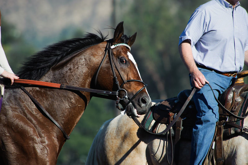 Racing Animal Animal Themes Bridle Day Domestic Domestic Animals Horse Horse Racing Horseback Riding Leading Livestock Outdoors Pets Ponying Real People Riding Thoroughbred Working Animal