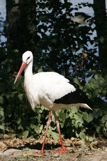 White bird perching on a tree