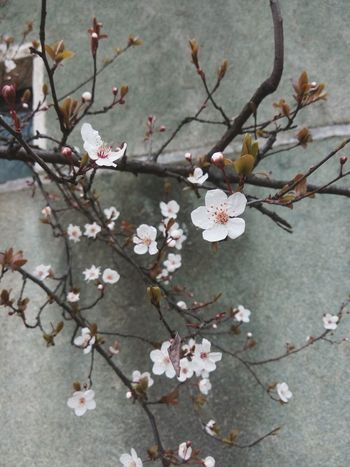 my favorite flower拍到了最爱的花花~ Flower Porn Spring! Spring Flowers Springiscoming Plum Blossom