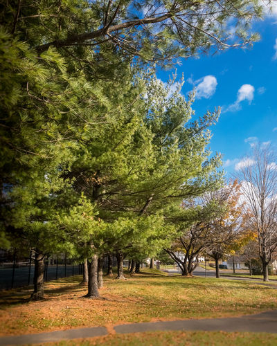 What does the Conifer now? Skies Autumn Beauty In Nature Day Fall Growth Landscape Nature No People Outdoors Seasons Sky Tree