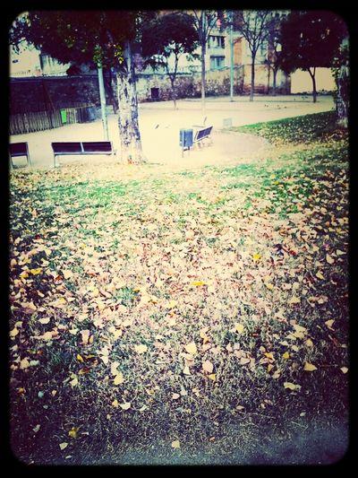Park#winter#morning