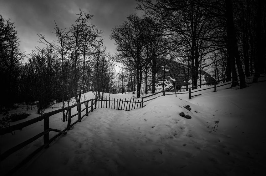 Nikonphotography Nikon Snow Winter Cold Temperature Tree Weather Nature Outdoors Day Beauty In Nature Tranquility Landscape No People
