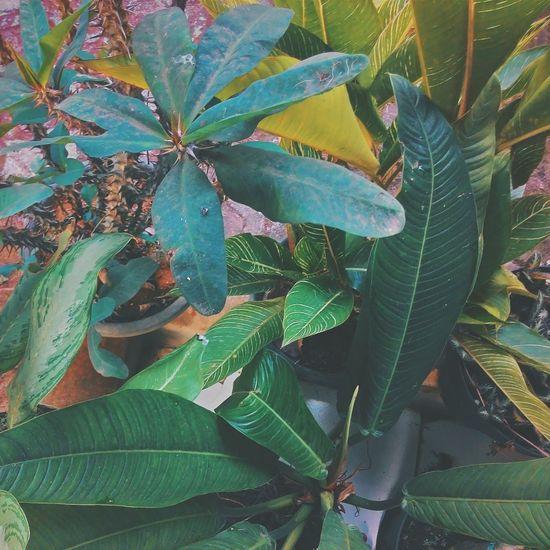 Naturegood Summer VSCO