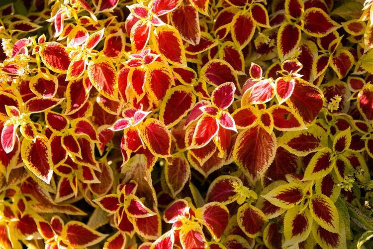 Full frame shot of orange cactus plant
