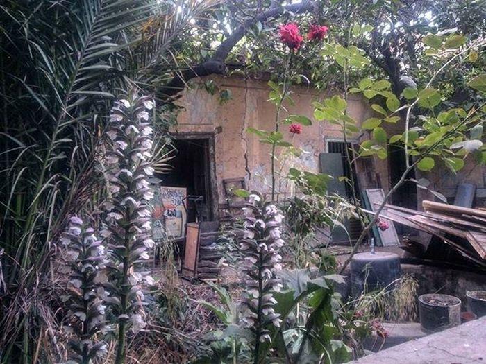 Recuperando espacios/Casona Compañía con Garcia Reyes 🌳🌹🏡 Abandonedplaces Oldhouse Decay Colonial Nature Garden Jardinsecreto Lostplaces