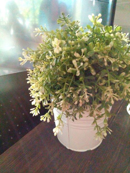Plastic Plants by: Victoria Sarabia
