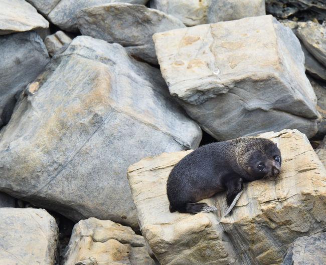 Seal Rock Solid