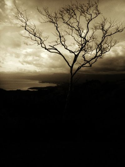 it's not dead. it's decidious tree.. ❤ Lintaonpeak