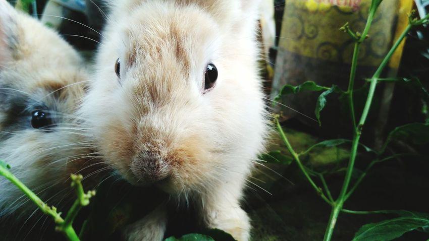 """ snack break :) _ flic.kr/p/QfFwmk _ Looking At Camera Mammal Domestic Animals Nature Pets Animal Themes Close-up Outdoors Rabbits Rabbit In My Yard Rabbit Eye Rabbit Face Bunnys Bunny Rabbit"