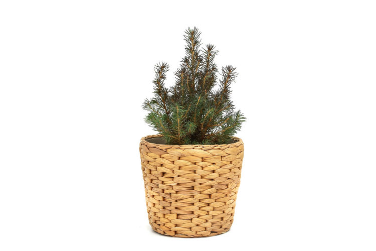 Close-up of potted plant in basket