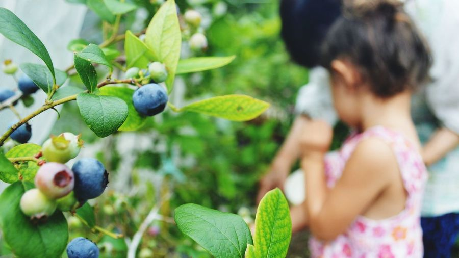 Summer Blueberries Picking Togetherness Great Grandmother Great Grand Daughter! Fruit Leaf Holding Close-up Plant Food And Drink Green Color
