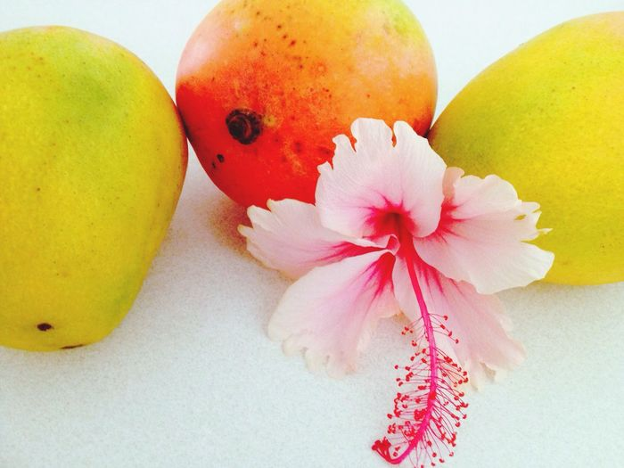 Mangoes Hibiscus