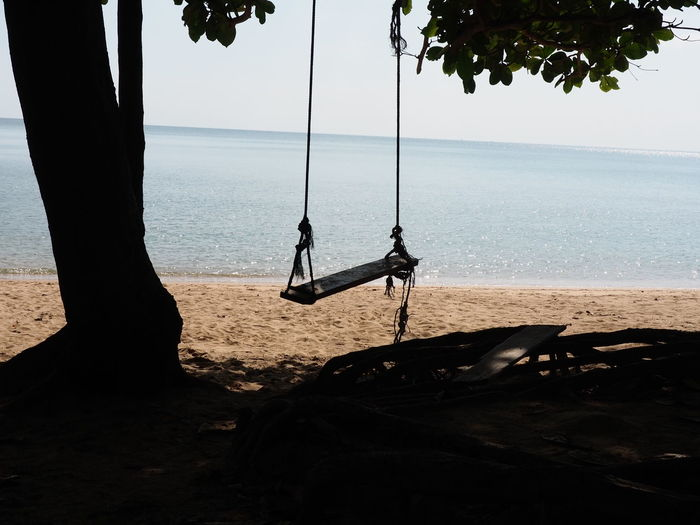 Rope Swing Tree
