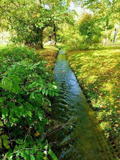 Bad Sulza Outdoors Nature Day Grass Growth Green Color Water No People Sunlight Shadow Tree Beauty In Nature