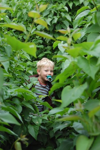 Portrait Of Smiling Boy With Pacifier In Mouth Standing Amidst Plants