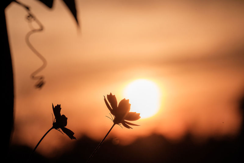 Close-up of orange flower against sky during sunset
