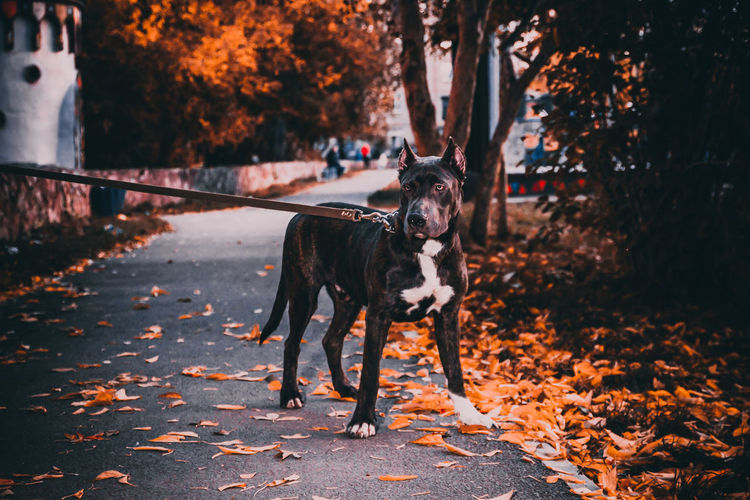 Dog standing on leaves during autumn