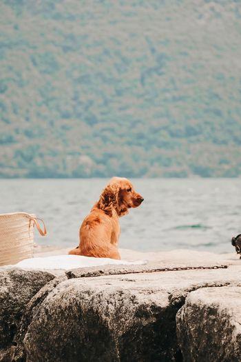 Dog sitting on rock by sea