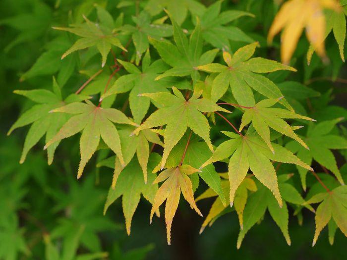Leaf Alternative Medicine Close-up Plant Green Color