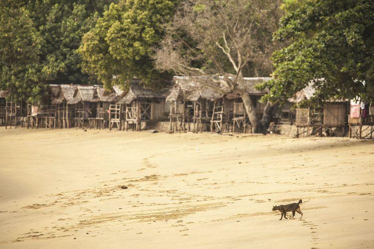Cat walking in beach by huts