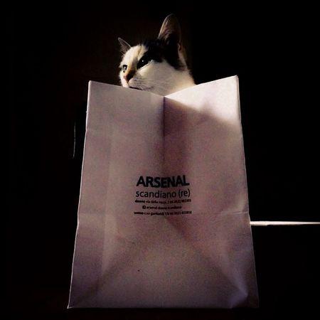 Cat Shopping Shadows Shoppingbag Catinabox Curiositykilledthecat Gattomatto LifeLessOrdinary Felinestyle Costeraiscool Arsenalscandiano