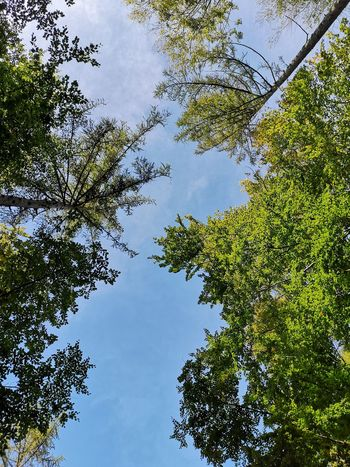 Tree Branch Leaf Full Frame Sky Green Color Woods Tree Canopy  Directly Below Treetop Skylight