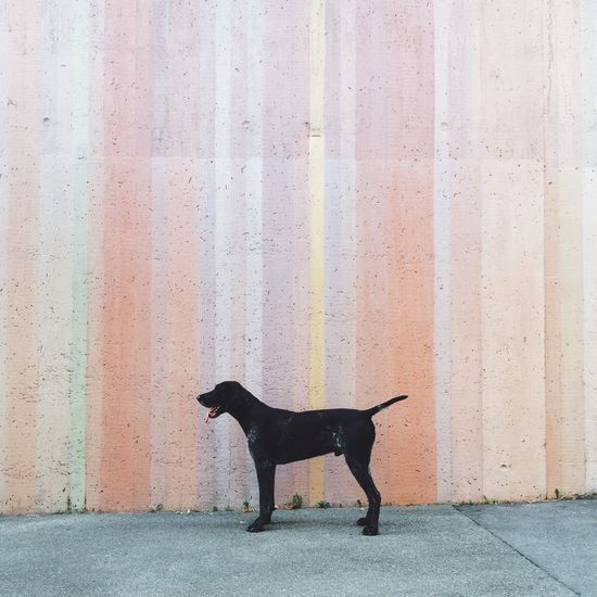 Dog Animals Cute Architecture Colors Love Eye4photography  EyeEm Best Shots Vscocam Instagood