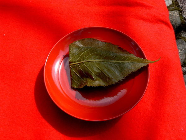 Cherry Leaf Close-up Food Japanese Sweets Leaf Red Red Dish Sakura Mochi Spring Still Life
