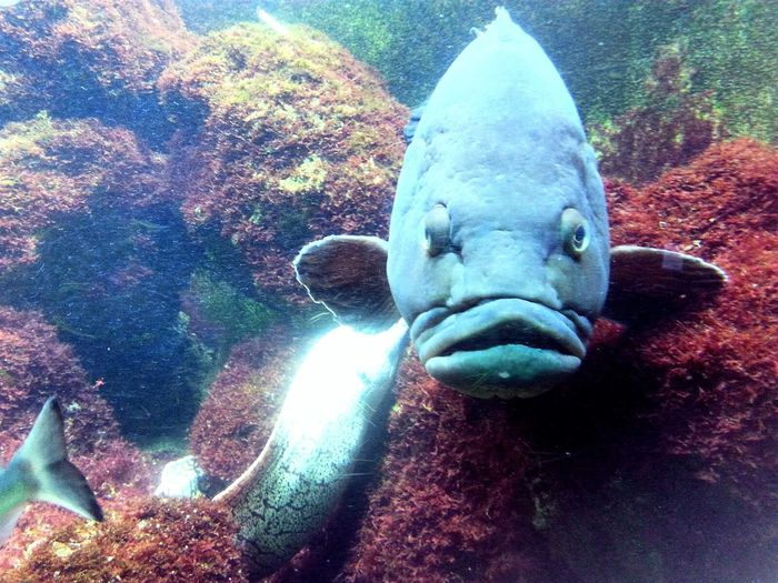 Hello World Eyem Fish Lovely Funny Face Blub Beautiful Colourful World Aquarium Life Plants Fishes Check This Out Colours Waterplants Eyem Best Edits Eyemphotos Eyem Gallery Underwater World Water Animal Photography EyeEm Nature Lover Eyem Best Shots Underwater Underwater