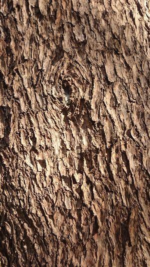 power of wood💪😤 Tree Wood Nature Shinjuku-gyoen Tokyo,Japan Backgrounds Full Frame Textured  Pattern Close-up