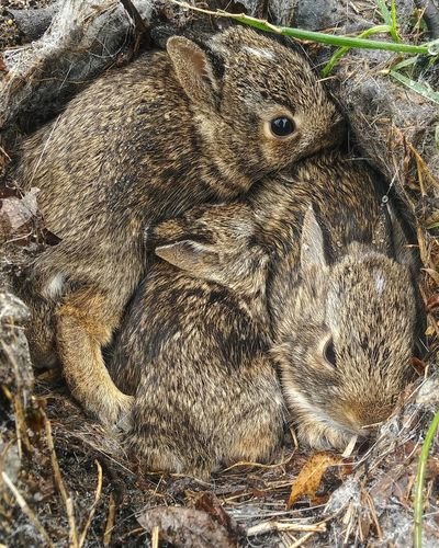 Baby rabbits in our garden. Rabbits 🐇 Animal Themes Babyrabbits Bunnies EyeEmBestPics EyeEm Best Shots Picoftheweek Shootermag Animals In The Wild Nature