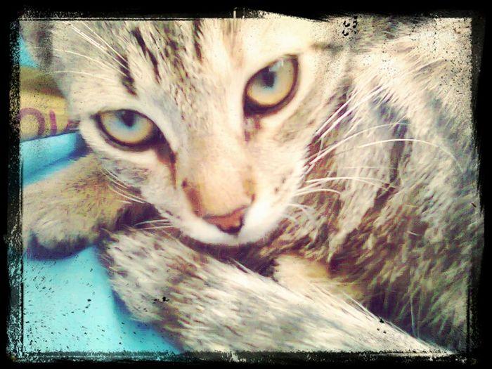 Cat Eyes Sweet Bestoftheday Bestpic