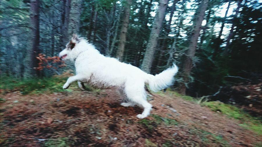My wee dug. Dog