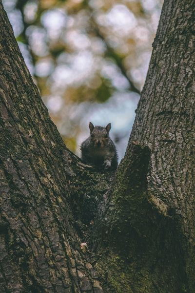 Saw this little guy up a tree Tree Tree Trunk Pets Close-up Sky Squirrel Wildlife Perching Plant Bark Autumn Mood