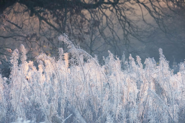 Frozen trees on field during winter