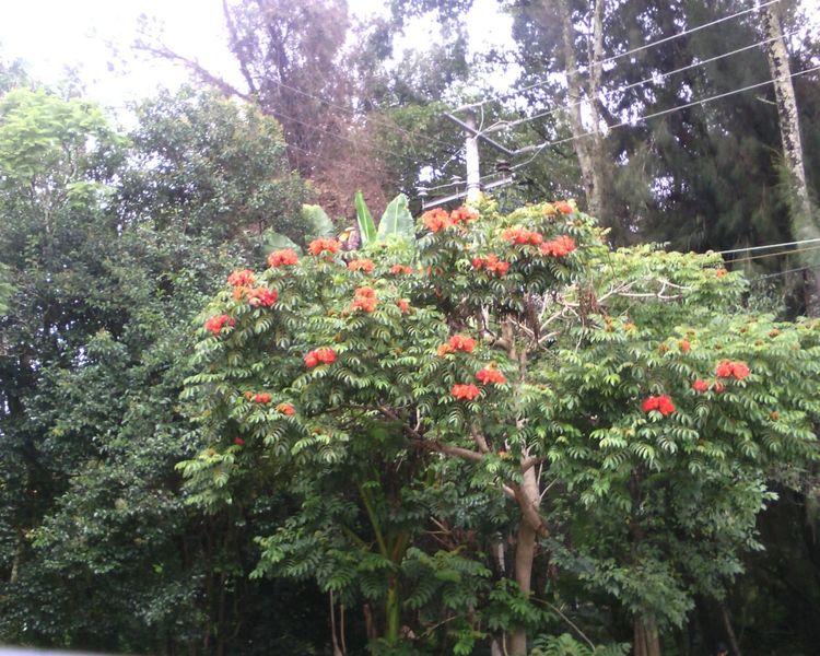 Forest Trip Flower Orange Flower