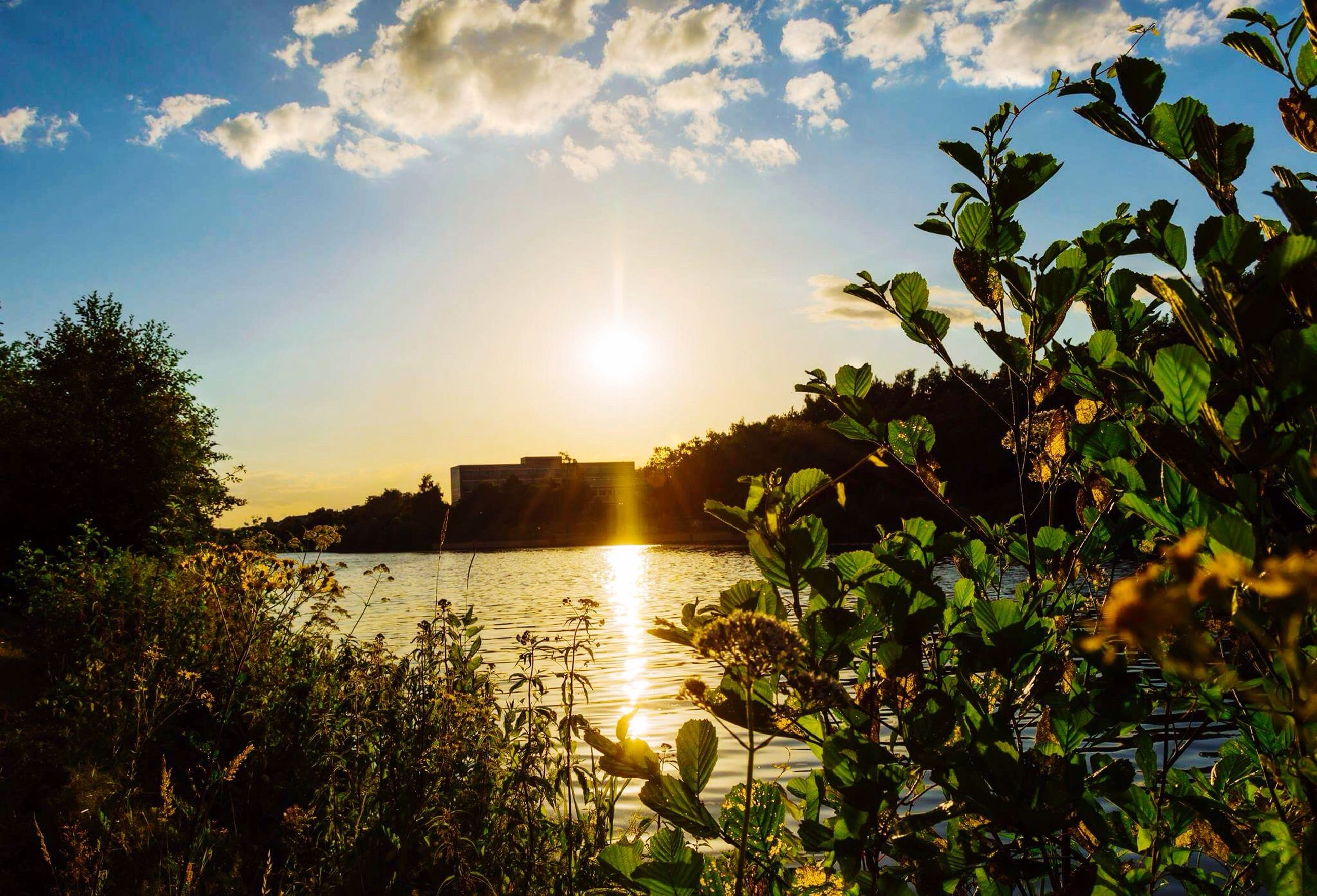 nature, sunset, water, tree, plant, sky, landscape, beauty in nature, sun, outdoors, no people, day