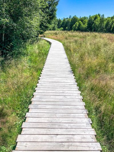 Wooden path in a marsh The Way Forward Moorland Marsh Holzpfad Wooden Path Pfad Pathway Path In Nature Path Plant The Way Forward Direction Growth Nature Day Footpath Sunlight No People Grass Beauty In Nature Outdoors Tranquility Diminishing Perspective Field Green Color