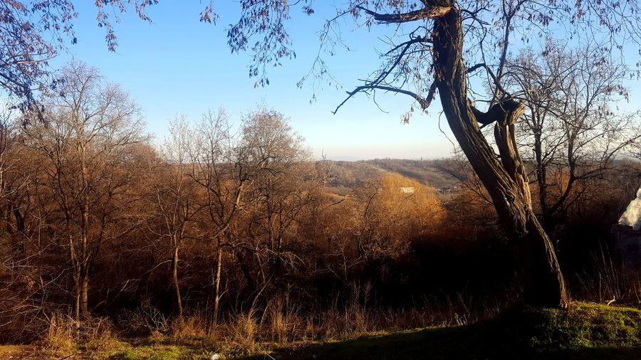 Romania Woods