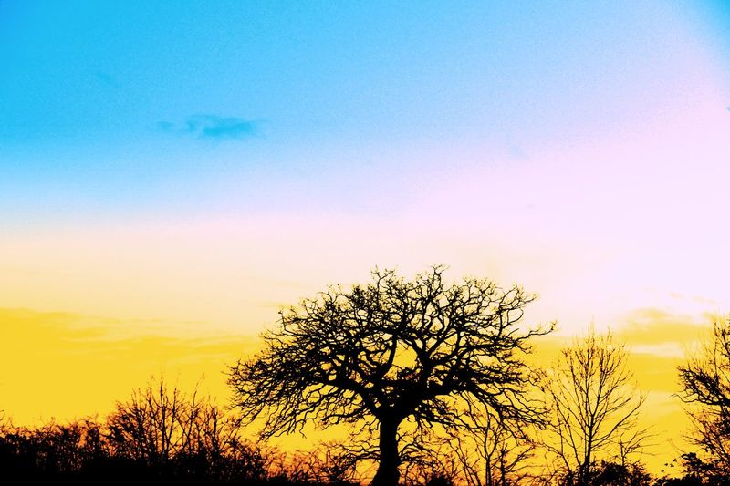 Trees Tree Creative Light Silhouette Imagination Colour & Light Coloursplash Tree Art Landscape_photography Landscape #Nature #photography