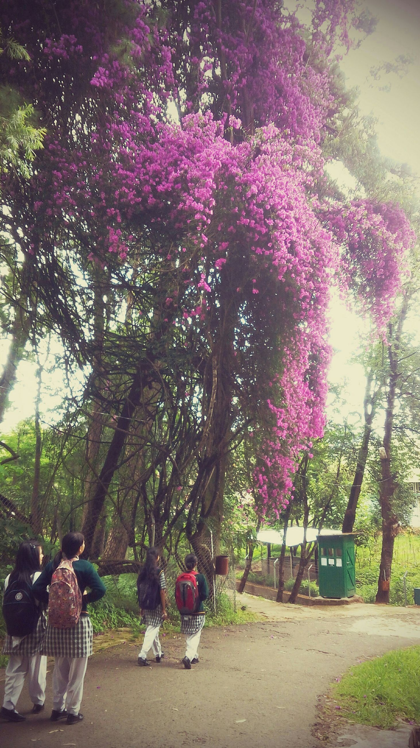 tree, growth, park - man made space, nature, flower, bench, beauty in nature, sunlight, leisure activity, plant, person, footpath, tree trunk, outdoors, lifestyles, park, day, branch, tranquility