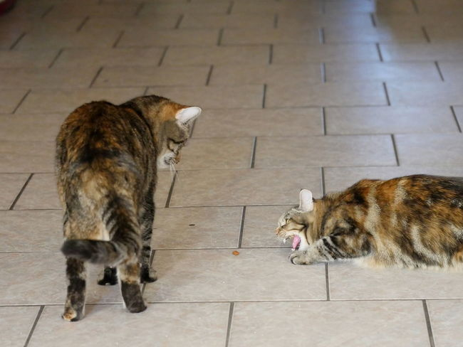 Animal Encounters Animals Cats Domestic Animals Encounter No People Pets Tabby Two Animals Animal Themes From My Point Of View Taking Photos Cat Mammal TabbyCat Capture The Moment Feline