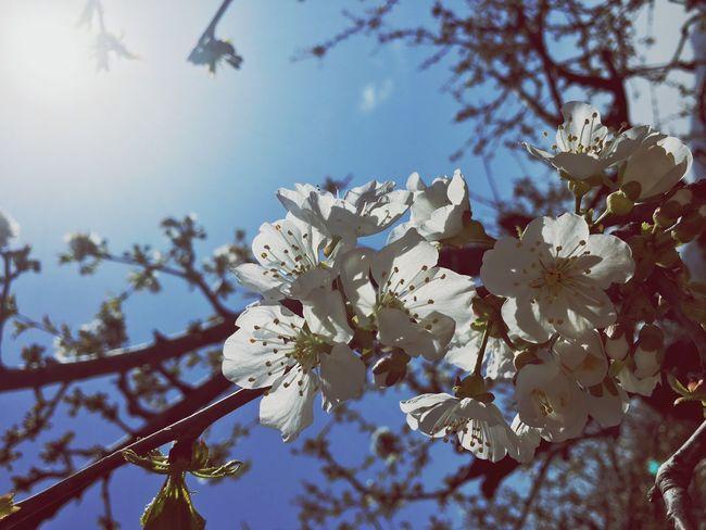 2016.04 꽃이 피다.