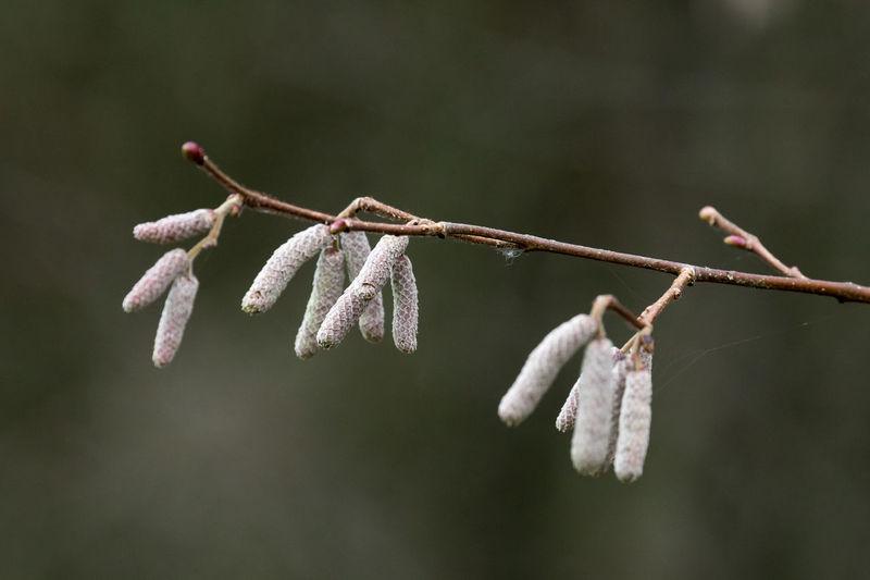 A walk in Linford Woods, Milton Keynes, UK AWalkInTheWoods Nature Wildlife Wildlife & Nature Winter Woods