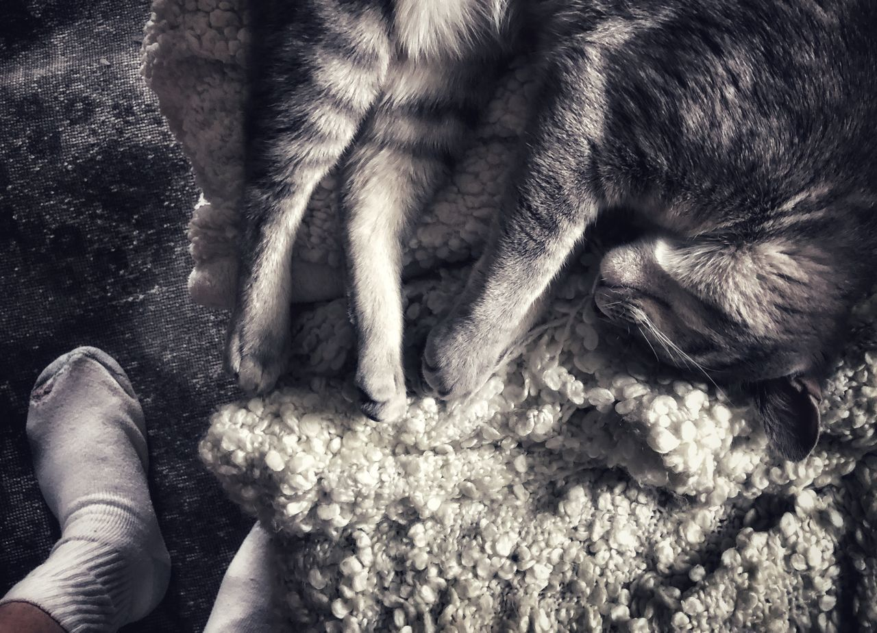 HIGH ANGLE VIEW OF HAND HOLDING CAT OUTDOORS