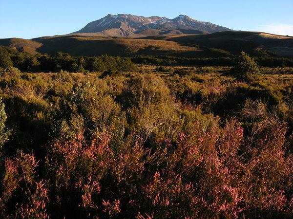 Beauty In Nature Copy Space Day Heath Landscape Mountain Mountain Range Nature Nature Reserve New Zealand No People Outdoors Scenics Tongariro Travel Vulcano