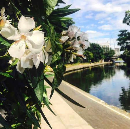 Flower Beauty In Nature Nature No People Petal Growth Day Outdoors Blossom Close-up Flower Head Tree Plant Sky Camden Town Camdencanal London Perspectives On Nature Postcode Postcards