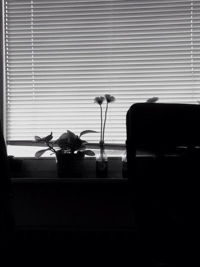 Office Flower Blackandwhite Window Blinds Indoors  No People Day